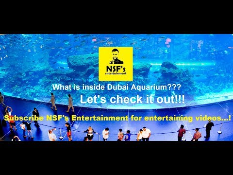 The Dubai Aquarium and Underwater Zoo | One Of The Largest Suspended Aquariums In The World