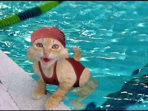 Lucu, Kucing Pintar, Binatang Peliharaan Terbaik, Trik Anjing, Kucing