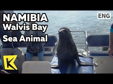 【K】Namibia Travel-Walvis Bay[나미비아 여행-월비스 베이]월비스 베이 바다 동물/Sea animal/Yacht/Pelican/Seal/Dolphin