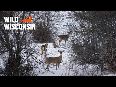What Does Chronic Wasting Disease Mean For Wisconsin's Hunters? - Wild Wisconsin 2018 Bonus Segment