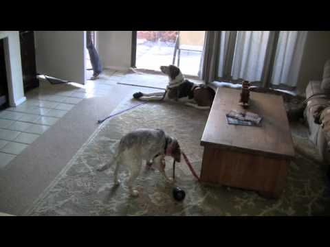 Dog Training Tutorial: Separation Anxiety, Behavior Modification