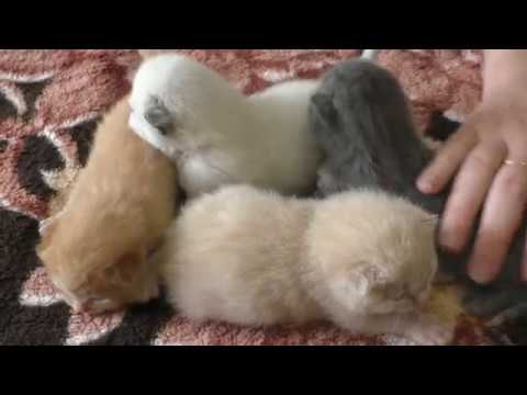 Котятам 1 неделя - Кошка Ласка и её позитивные котята) Отдам котят.