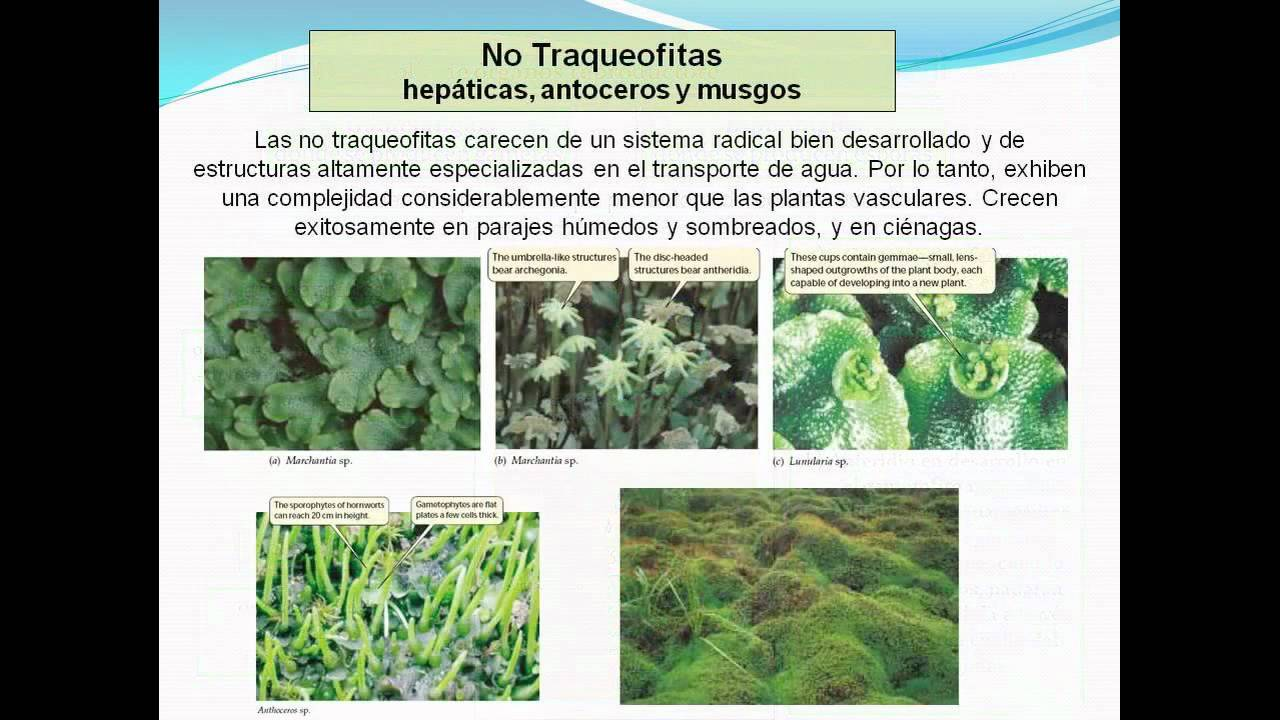 Plantas sin semillas youtube for Plantas sin semillas