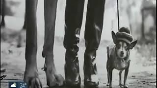 SPTV - Elliott Erwitt   Vida de Cão