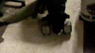 Weight Lifting Rottweiler