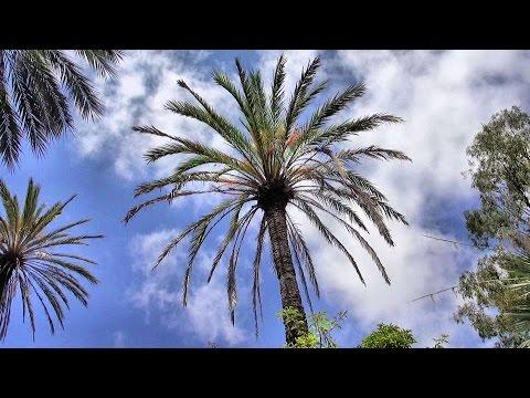 Jardin Botanique de la Villa Thuret, Antibes, Côte d'Azur, France [HD] (videoturysta)