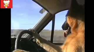 Смешные и умные животные Приколы видео Смех да и только