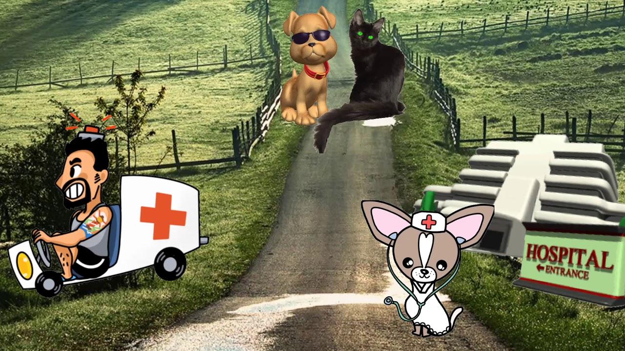 КРАШ. Собаки и кошки. Под песню Клавы Коки & NILETTO ...