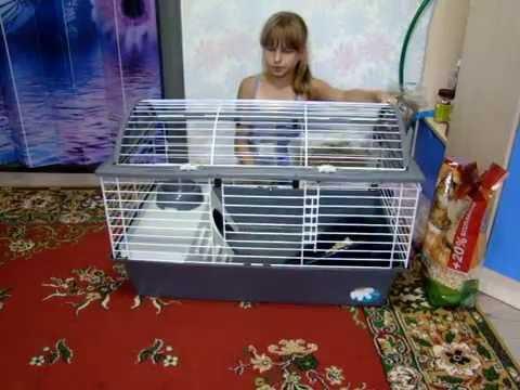 Что нужно для появления декоративного кролика в доме?!   Yumi Life  