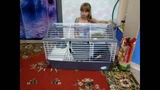 Что нужно для появления декоративного кролика в доме?!|| Yumi Life||