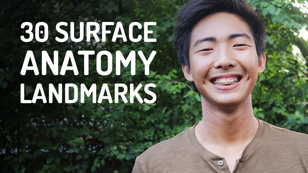 30 Surface Anatomy Landmarks | Whole Body - YouTube