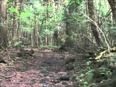 Aokigahara Jukai in Japan.wmv