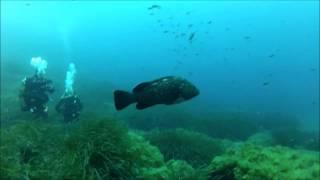 plongée sous marine à porquerolles