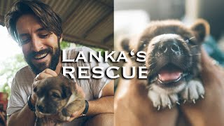 How Saving A Street Dog Puppy Changed Our Lives