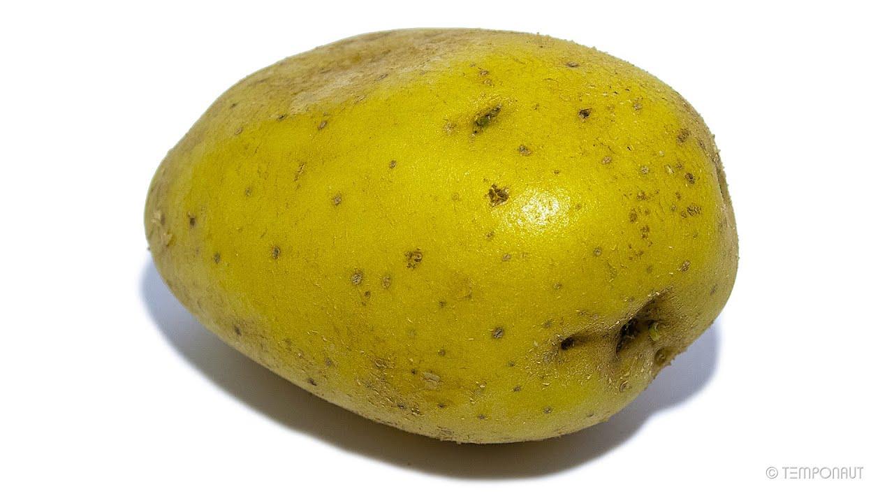 Potato Timelapse