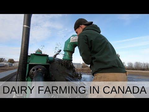 Dirty Jobs On Dairy Farm