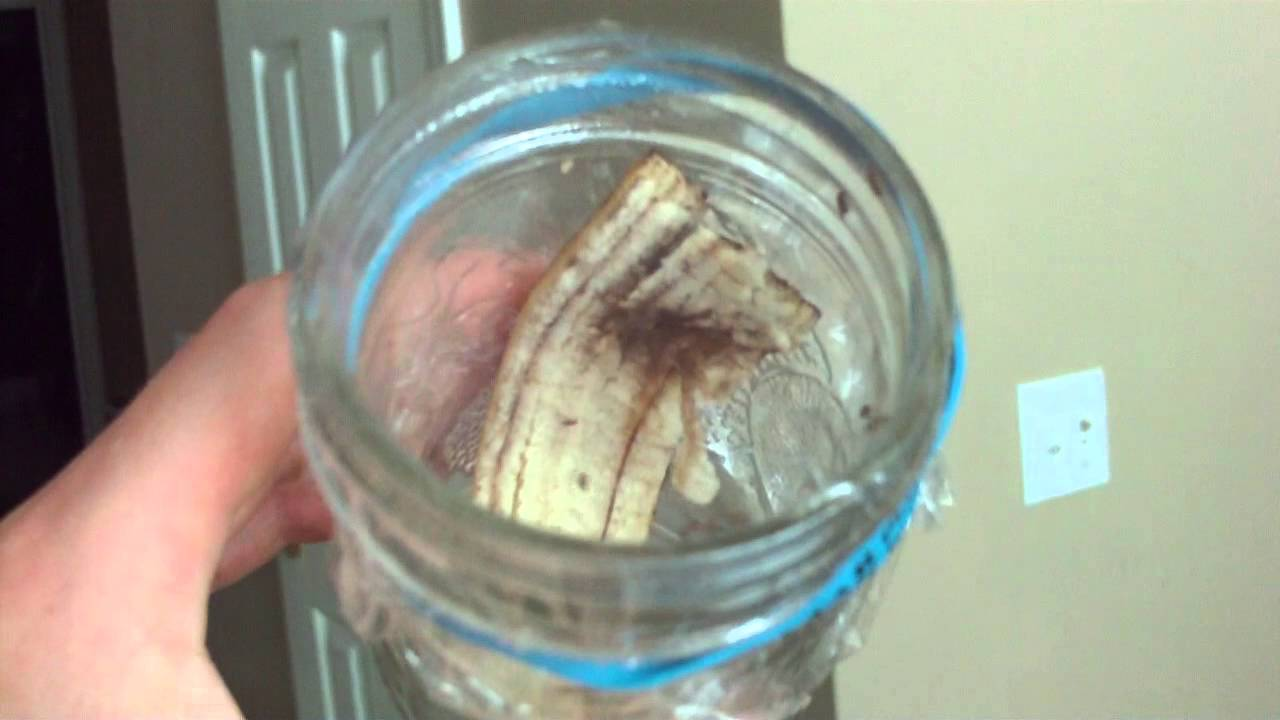 Banana Peel Gnat Trap Youtube