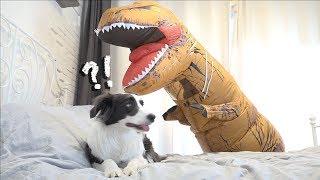 아주 똑똑한 강아지의 공룡 보기 3초 전 (과연...?)