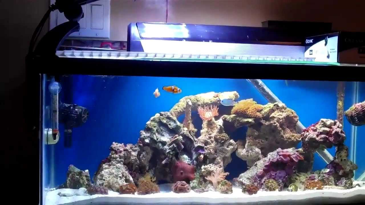20 gallon reef tank youtube feeding my reef tank 20 for 20 gallon saltwater fish tank