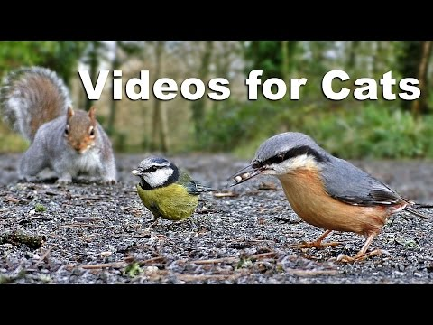 Videos For Kittens And Cats To Watch - Birds And Squirrels  On The Ground