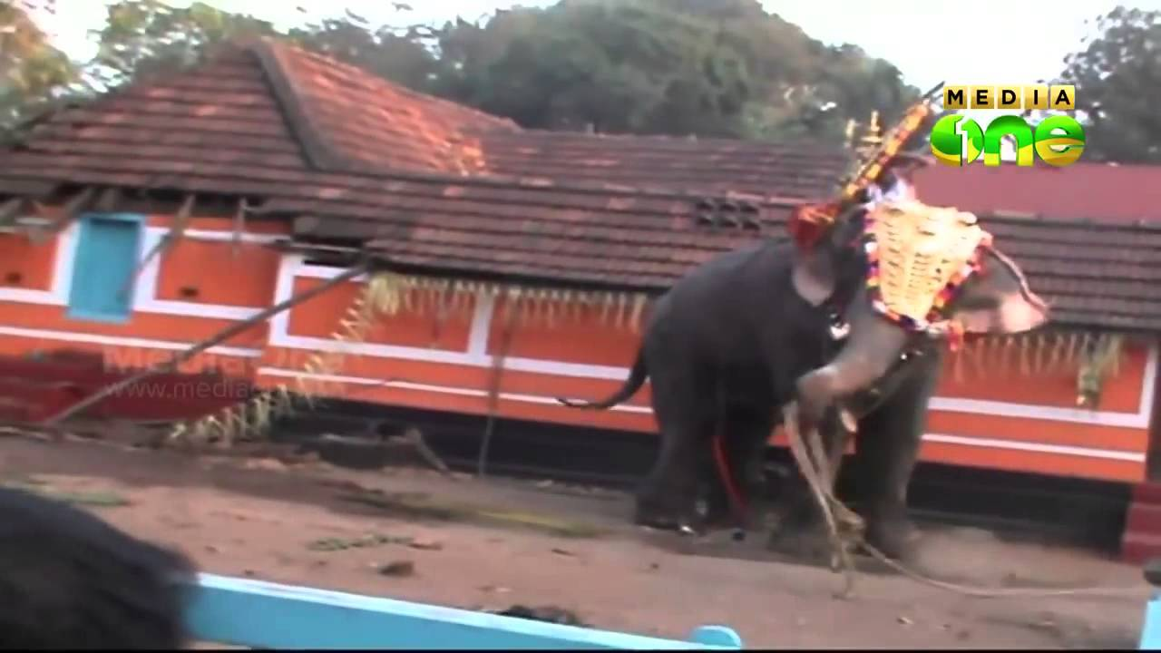 Elephant Attack In Kerala 2012 elephant attack | Funn...