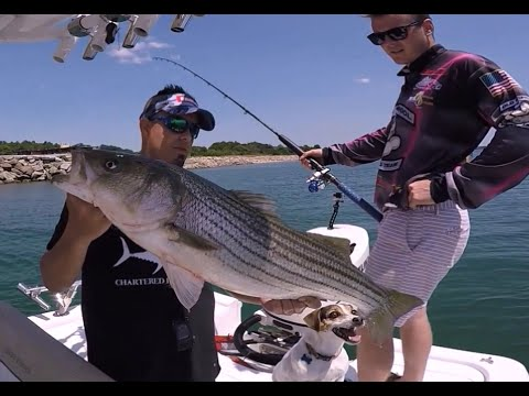 BIG Stripers On Live Mackerel!  Rigging Tips For BIG STRIPED BASS! Massachusetts Striper Fishing.