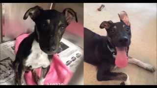 Собаки до и после того, как их забрали из приюта ( dogs before and after )