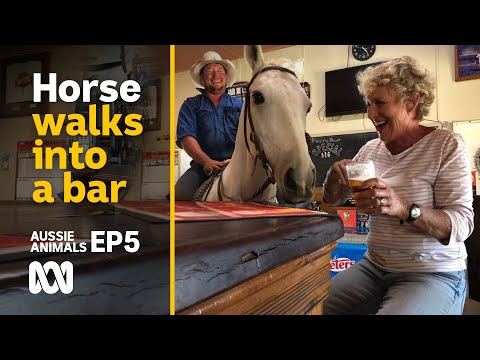 A Horse Walks Into A Bar... And Other Tall Stories 🐴🍺 | Back Roads