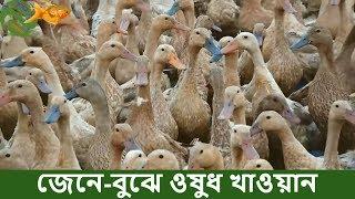 ৩৫ টি হাঁস হতে এখন ১০০০ টি হাঁসের মালিক মজিবুর রহমান _ তার মতে, হাঁস পালনও একটা চাকুরী_ Duck Farming