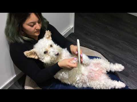 Filing Dogs Nails  - Calm and Easy
