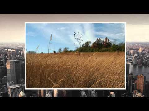 Silencing the Sky's: Common Song Bird Decline