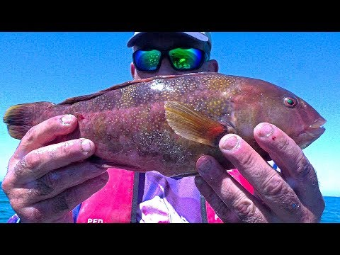 REMEDIAL REEF FISH And CHIPS - CATCH N COOK