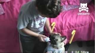 Boy Plays Dress Up With Pug