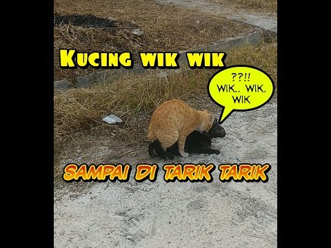 Download Mp3 Tipe X Kucing Kawin
