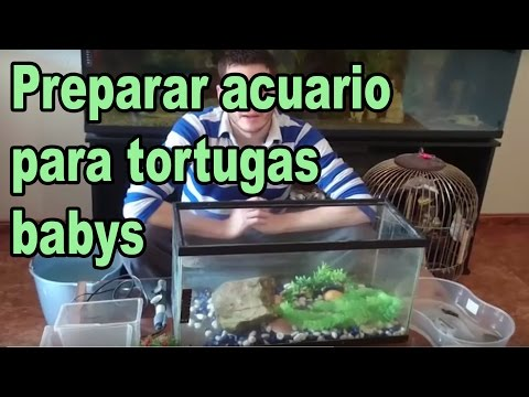 Acuario para tortugas de agua doovi for Acuario tortugas