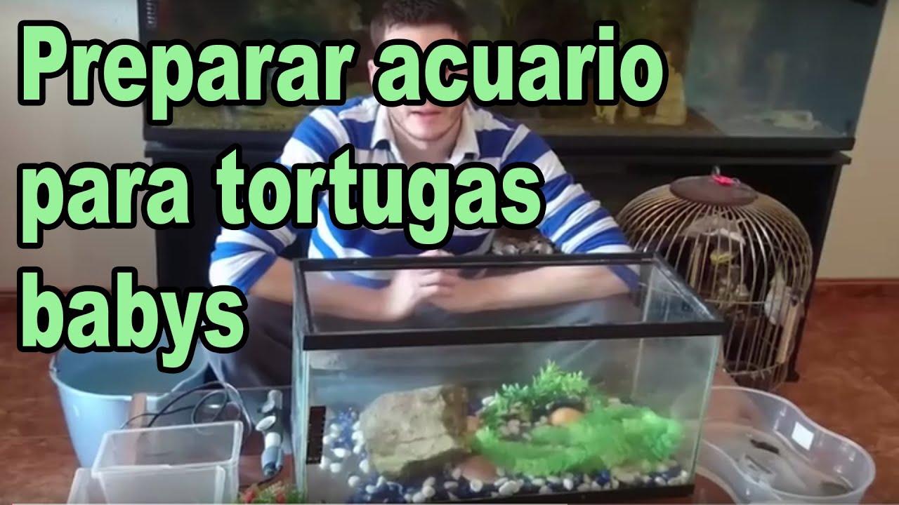 Preparar acuario para tortugas babys youtube for Acuario tortugas