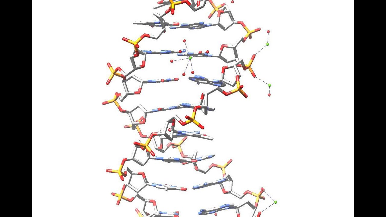 3d dna structure rotating and rotating and rotating youtube 3d dna structure rotating and rotating and rotating ccuart Gallery