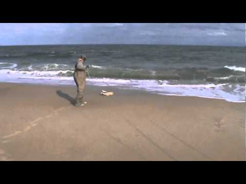 Surf fishing salvo nc cape hatteras by capt jake oct 2011 for Nc surf fishing report
