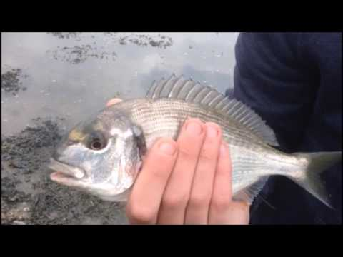 Little Silver Beauties - Bream and Bass (Estuary Fishing Ep2)