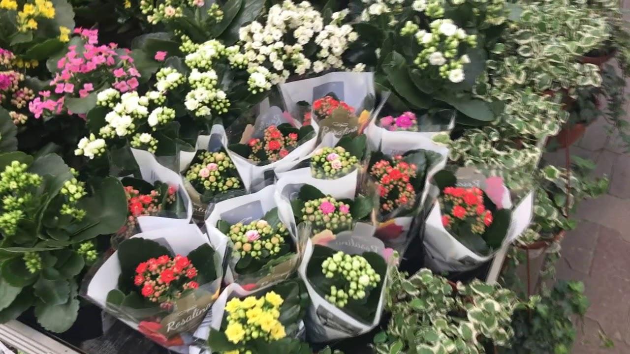 Цветы белой дачи каталог цветов