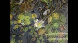 김선일한국화화실   2016 가을 평강 식물원 습지 연…