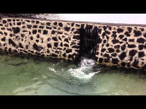 Ancient Fishing Method - Kona, Hawaii