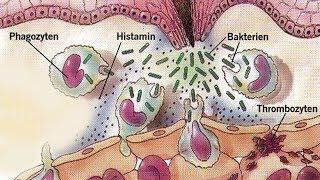 Die große Cholesterinlüge kommt ans Licht und jeder ist schockiert!