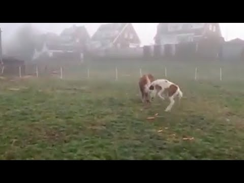 Miniature Horse Gets Scared At Carrots