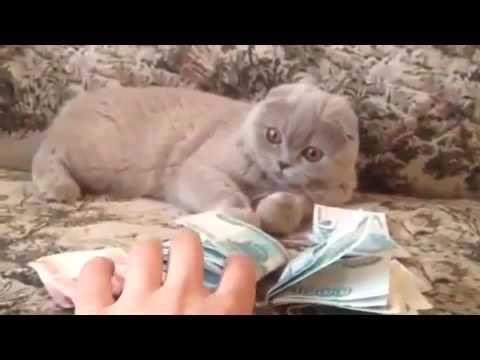 Говорящий кот ругается матом -