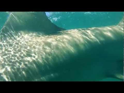 Panama city beach shark feeding frenzy 11 22 2015 doovi for Shark fishing panama city beach