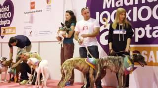 Madrid100x100 Adopta