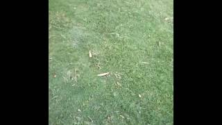 Gambar cover list of different types of grass in india,types of grasses and their botanical video