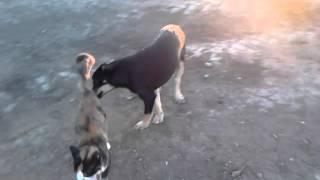 Любовь собаки и кошки в зоне АТО.mp4