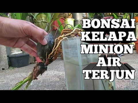 Bonsai Kelapa Minion Media Air Model Air Terjun Youtube